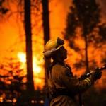 Fire Danger Notification Tree 2016/2017