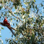 The Chewton Bushlands Association