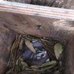 Nesting box rewards.